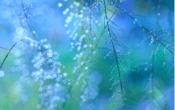 http://500px.com/photo/46926796/after-the-rain-by-shihya-kowatari
