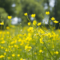 500px.com:photo:71212:meadow-by-valentin-grischenko
