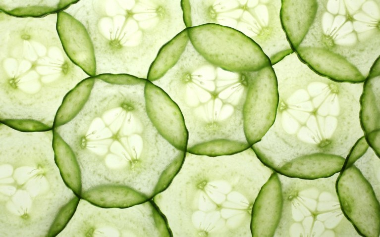 cucumber-veggie-of-the-week-ftr