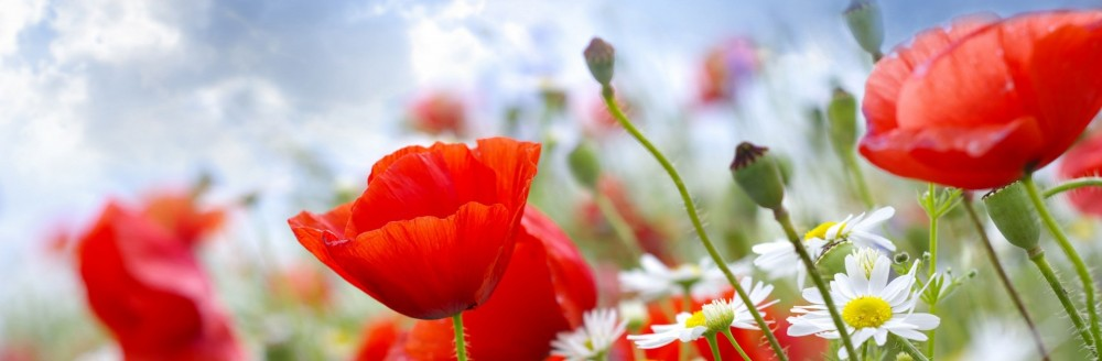 red_summer_flowers_wallpaper_in_hd