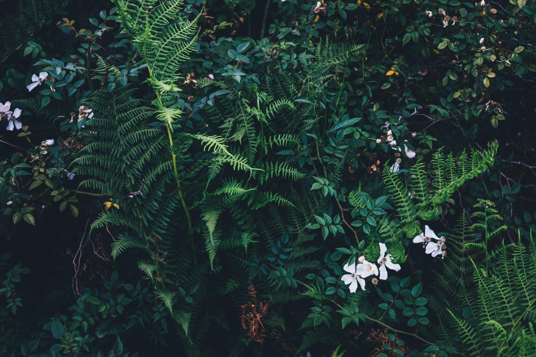 Zīlēšana vasaras saulgriežos