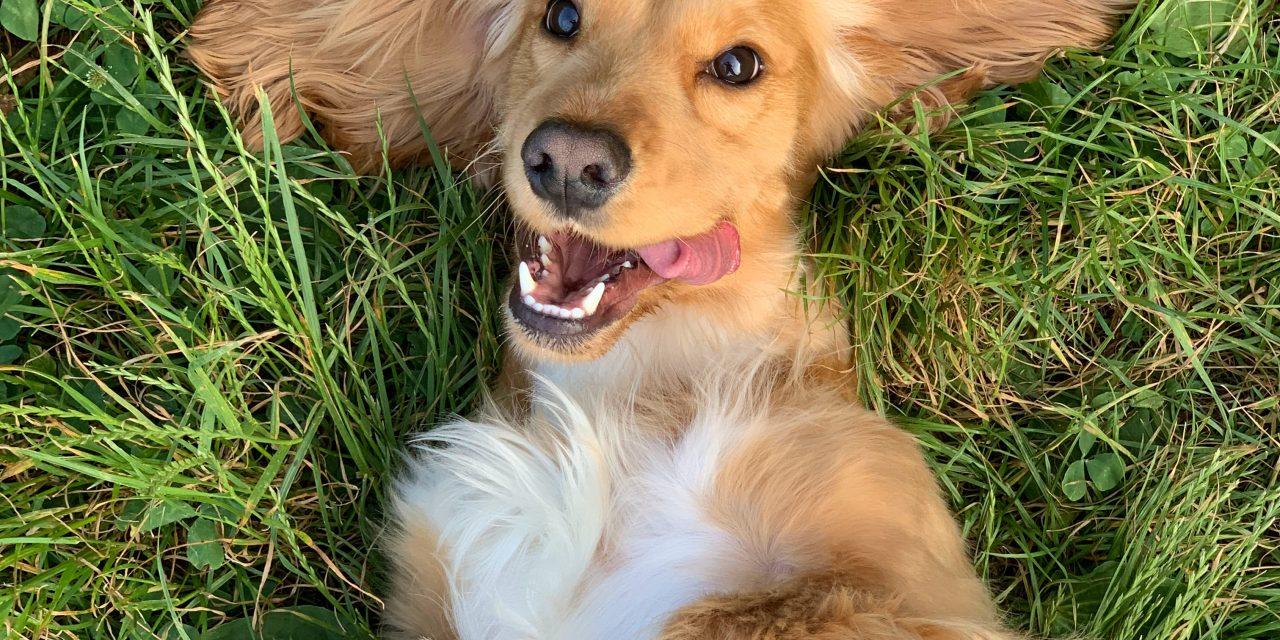 No ērcēm brīvs suns – laimīgs suns