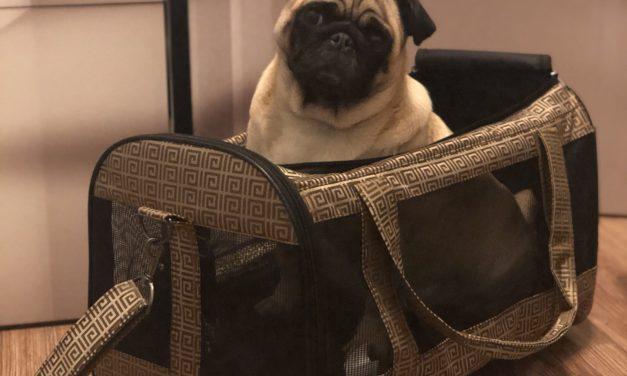 Transports sunim – viņa paša soma